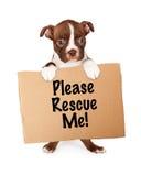 Удерживание щенка терьера Бостона принимает меня знак Стоковые Фото