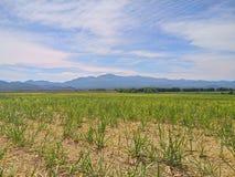 Удивительнейшая земля сельского хозяйства Стоковое фото RF