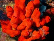 Море squirt Стоковая Фотография RF