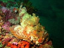 Характеристики моря стоковое изображение rf
