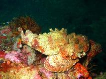 Характеристики моря стоковые изображения rf