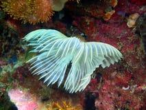 Жабры глиста моря Стоковые Фотографии RF