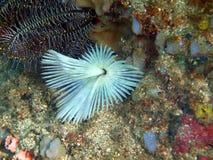Жабры глиста моря Стоковое фото RF