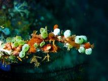 Море squirt Стоковые Фото