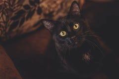 Удивленный голодный кот стоковые изображения rf