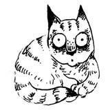 удивленный кот Стоковое Изображение