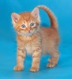 Удивленный пушистый котенок имбиря на сини Стоковое Изображение RF