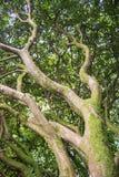 Удлиняя ветви Стоковые Фото