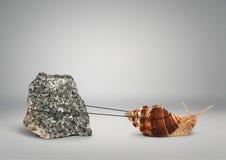 Улитка вытягивая большой камень, медленно концепцию настойчивости Стоковое фото RF