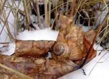Улитка в снеге Стоковые Изображения