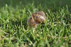 Улитка в траве Стоковая Фотография