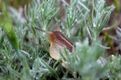 Улитка в траве Стоковое Изображение