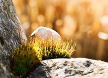 Улитка в цветках мха Стоковая Фотография RF