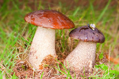 Улитка и грибы. Стоковые Фото