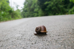 Улитка, идет дорога, Стоковое Изображение RF