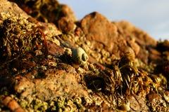 Улитка и наяды моря стоковое изображение