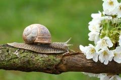 Улитка и цветения стоковые изображения
