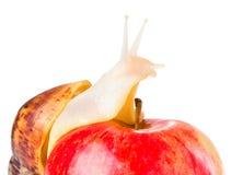 Улитка и яблоко стоковые изображения