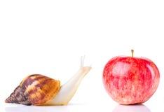 Улитка и яблоко стоковые изображения rf