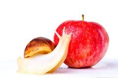 Улитка и яблоко стоковые фотографии rf