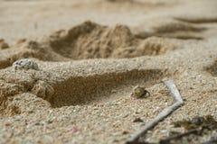 Улитка моря на песке с зелеными лист стоковые изображения rf