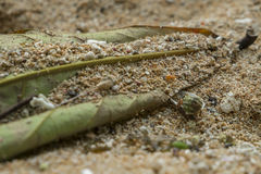 Улитка моря на песке с зелеными лист стоковое фото rf