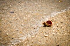 Улитка моря Стоковое Изображение RF
