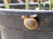 Улитка на вазе Стоковая Фотография RF