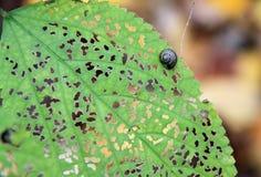 Улитка на листьях стоковая фотография