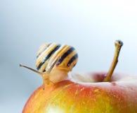 Улитка на красном яблоке стоковое изображение