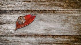 Улитка на красных лист стоковое фото rf