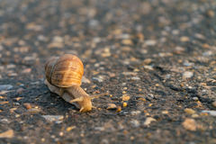 Улитка на дороге Стоковая Фотография RF