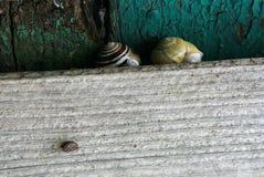 Улитка на доске стоковое фото rf