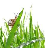 Улитка на росной траве стоковые изображения