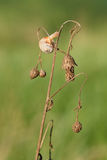 Улитка на сухом цветке стоковое фото rf