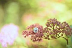 Улитка на цветах сирени Фото искусства Стоковое Изображение RF