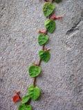 Улитка покидает зеленый цвет лист Стоковая Фотография