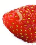 Улитка плодоовощ Стоковые Фотографии RF