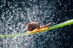 Улитка с частицами воды как предпосылка Стоковые Изображения RF