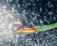 Улитка с частицами воды как предпосылка Стоковые Фото