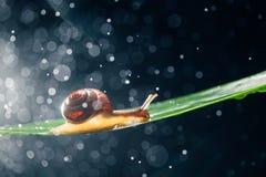 Улитка с частицами воды как предпосылка Стоковые Фотографии RF