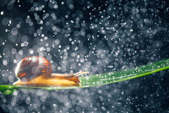Улитка с частицами воды Стоковая Фотография RF