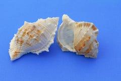 Улитки моря Стоковое фото RF