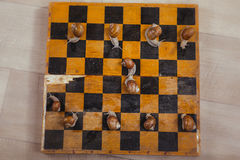 Улитки с шахмат Стоковое Фото