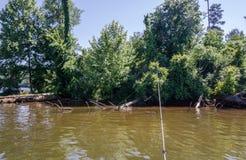 Удить среди выхватов дерева на береге озера Стоковое Изображение