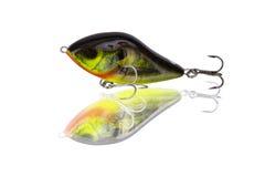 Удить sunfish расцветки прикормом Стоковая Фотография RF