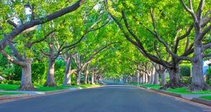 Улица Беверли-Хиллз Стоковые Фотографии RF
