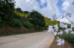 Улица белого цветка в сторону Стоковое Фото