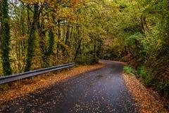 Улица внутри леса стоковое фото