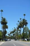 Улица выровнянная пальмой Стоковые Изображения RF